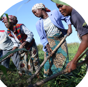 AGRICULTURE AND  PRIVATE SECTOR  DEVELOPMENT