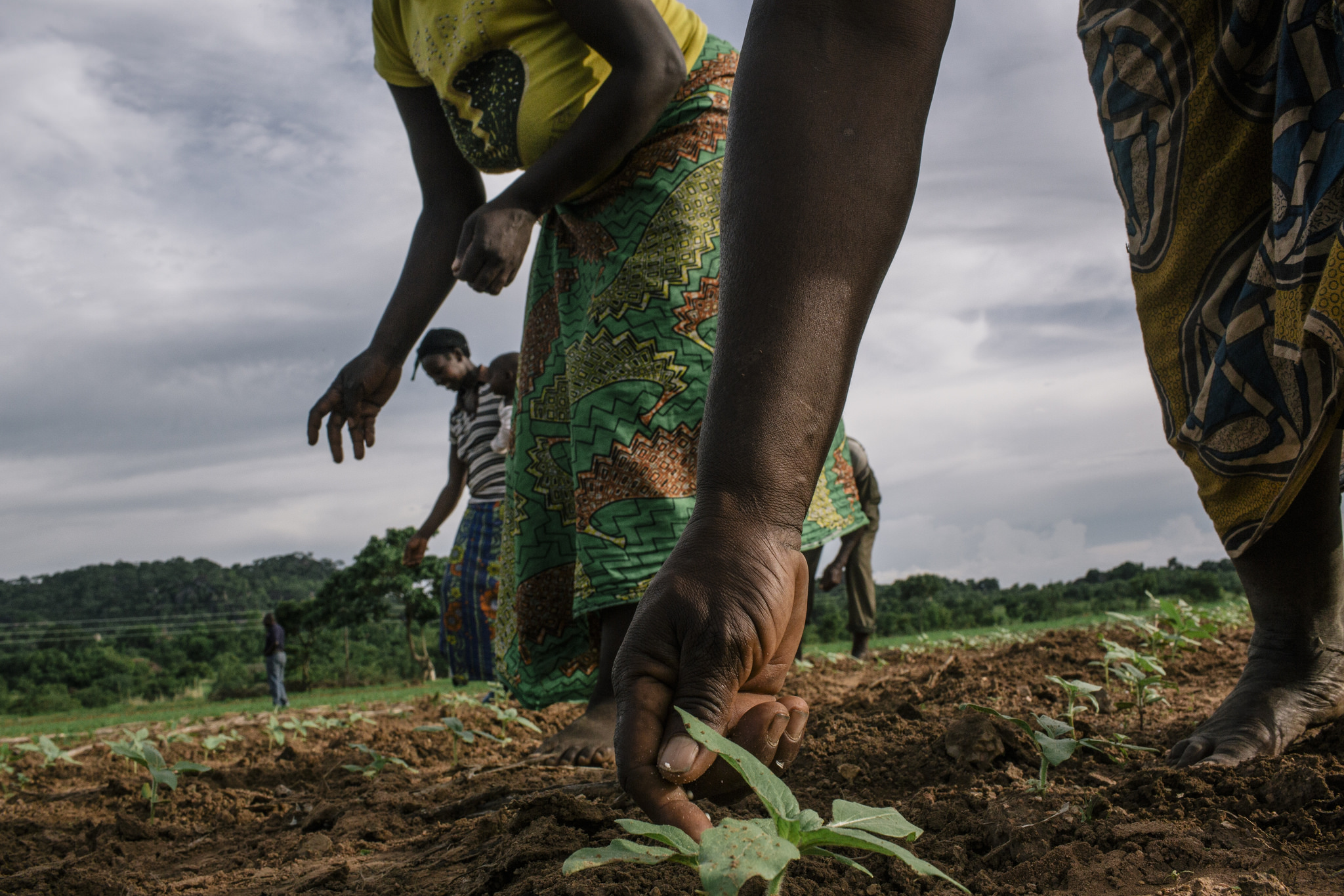Economic Development Environment And Food Security Zambia U S Agency For International