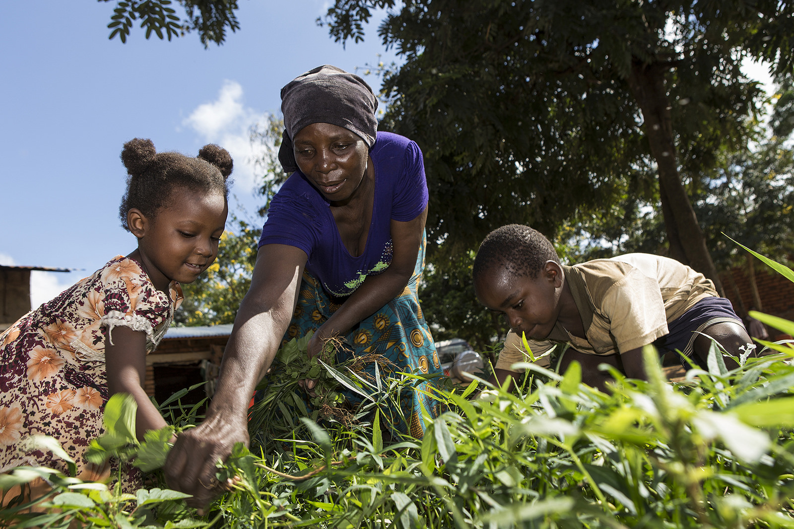 Aziza Ismail Waziri (in purple) tends to her home garden with the help of her children in the village of Kauzeni