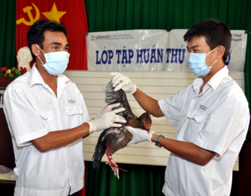 USAID trains animal health workers in poultry vaccination in Vietnam.