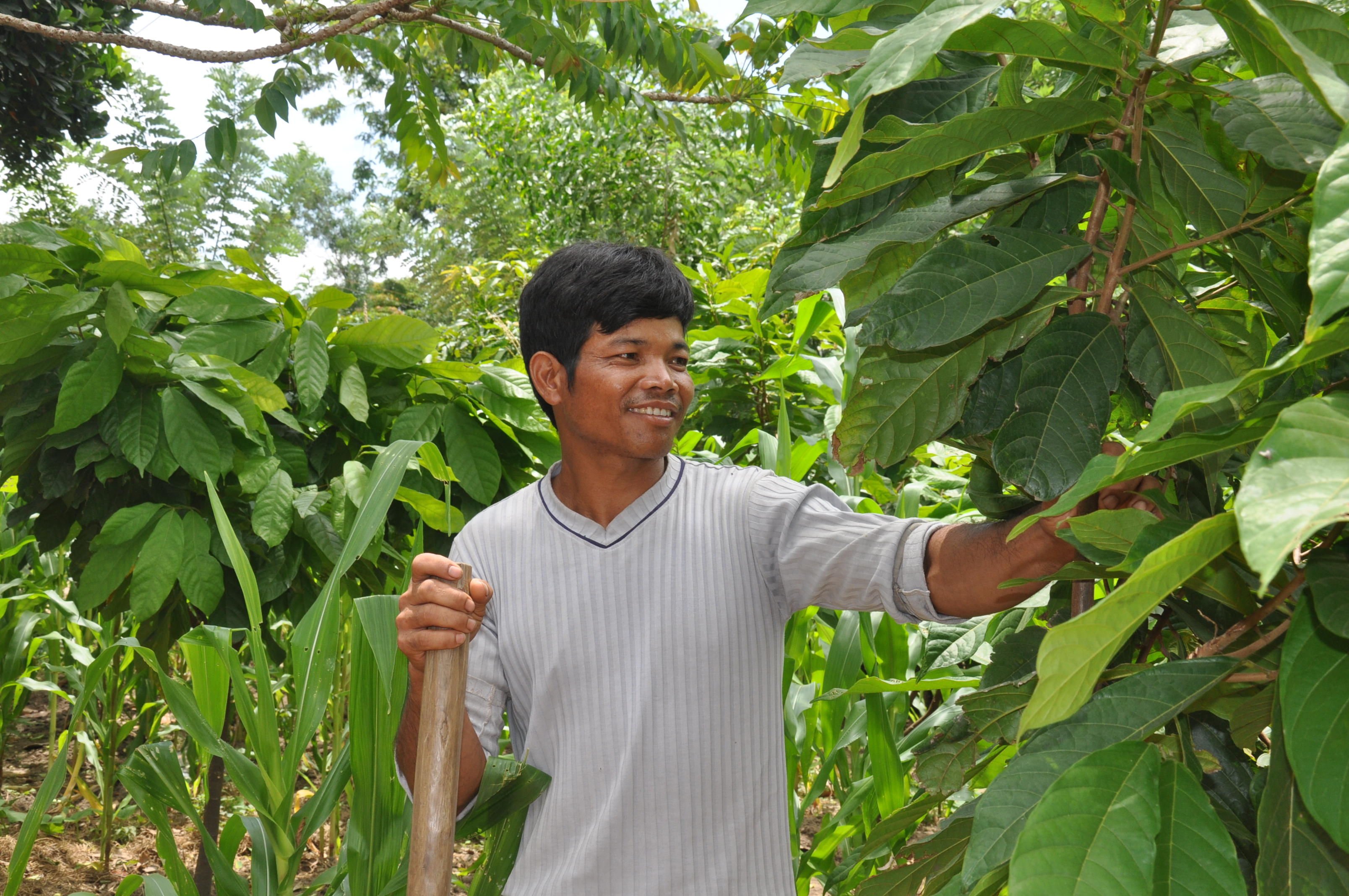 USAID helps ethnic minorities in Vietnam earn a better living by harvesting cocoa.