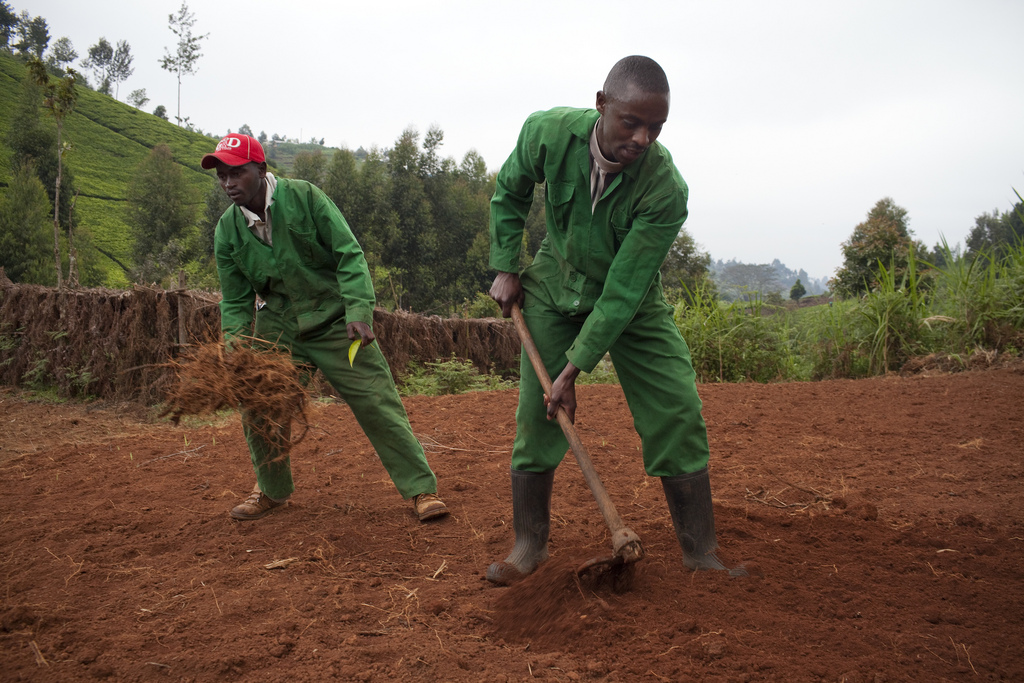 Mariaini bunge member Joseph Chege (red hat) pitches in on greenhouse prep. He is part of the USAID Youth Bunge program