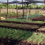 Haiti: Drip Irrigation Makes New Farm Possible