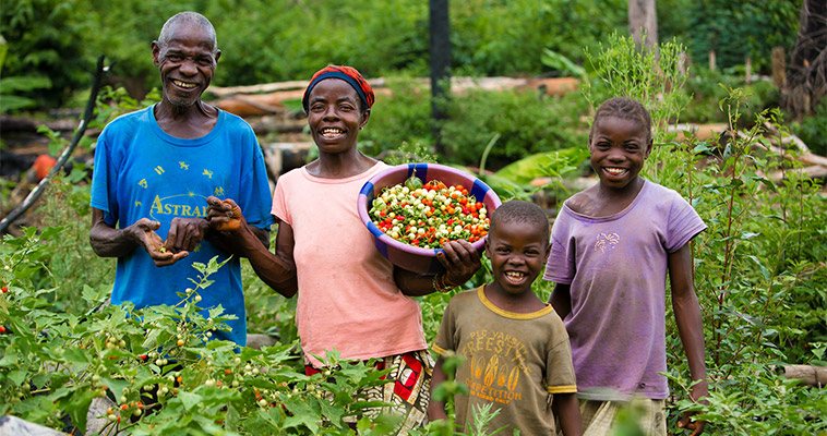 Meet Annie and John, traditional farmers, and two of their six children on their family farm. The family lives in Liberia and has gained knowledge on farming lowland rice and vegetables through Feed the Future.