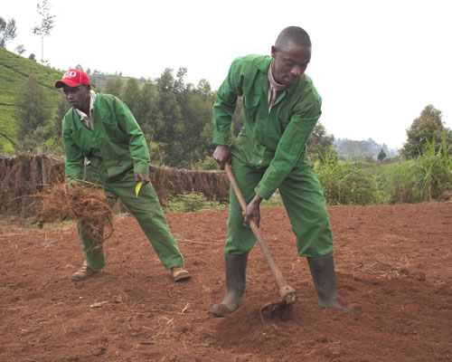 Mariaini bunge member Joseph Chege (red hat) pitches in on greenhouse prep.