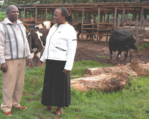 KCB loan officer Elseba Ndiema follows up with dairy farmer Stephen Chepoi on the health and productivity of the cows he purchas