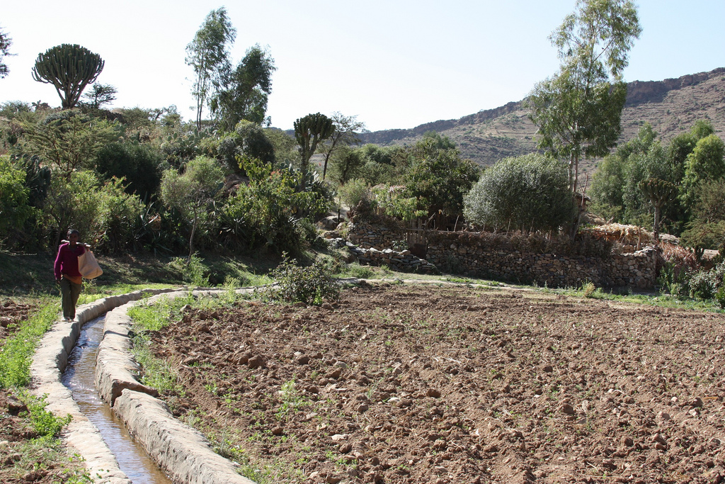 Irrigation Site in Tigray, Ethiopia