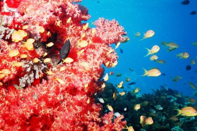 Image of coral reef in the Red Sea, Egypt