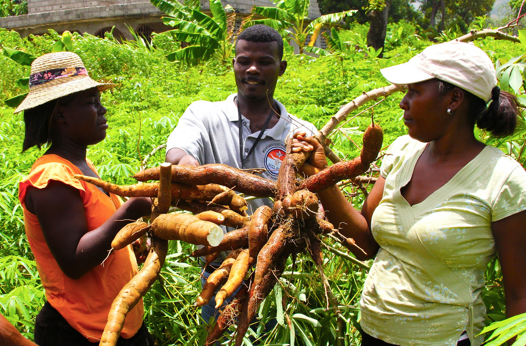 An extension worker with cassava farmers in Haiti