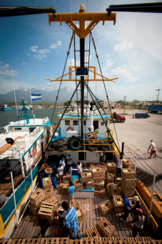 Industrial lobster trap boat in La Ceiba, Honduras