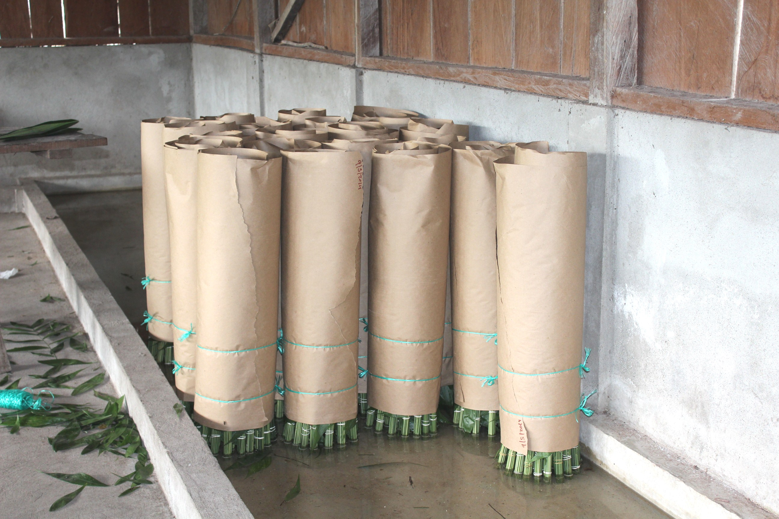 Bundles of xate in Uaxactún are ready for transport to the central processing facility.