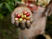 A woman's hand holds coffee beans