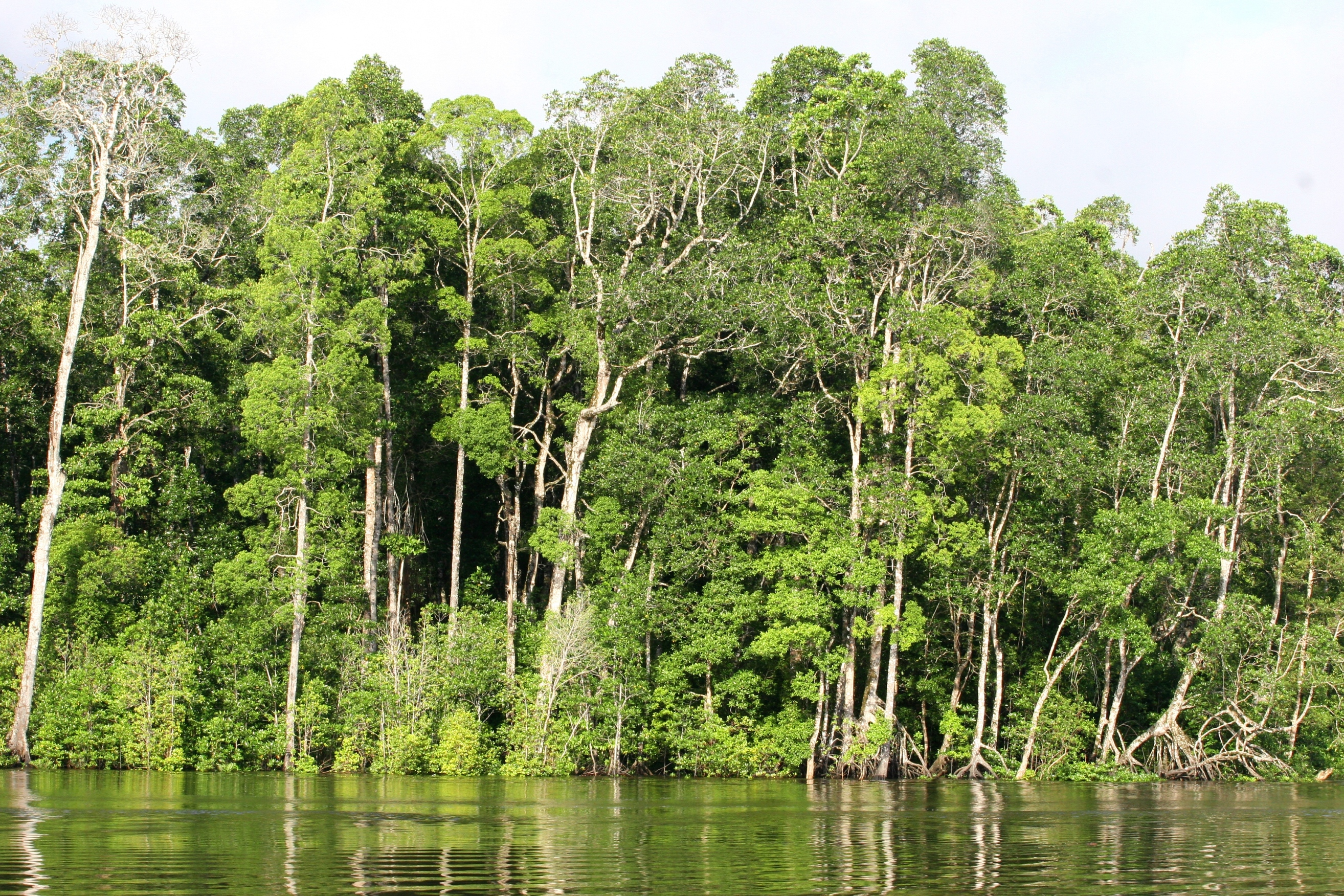 Image of forest in Indonesia.