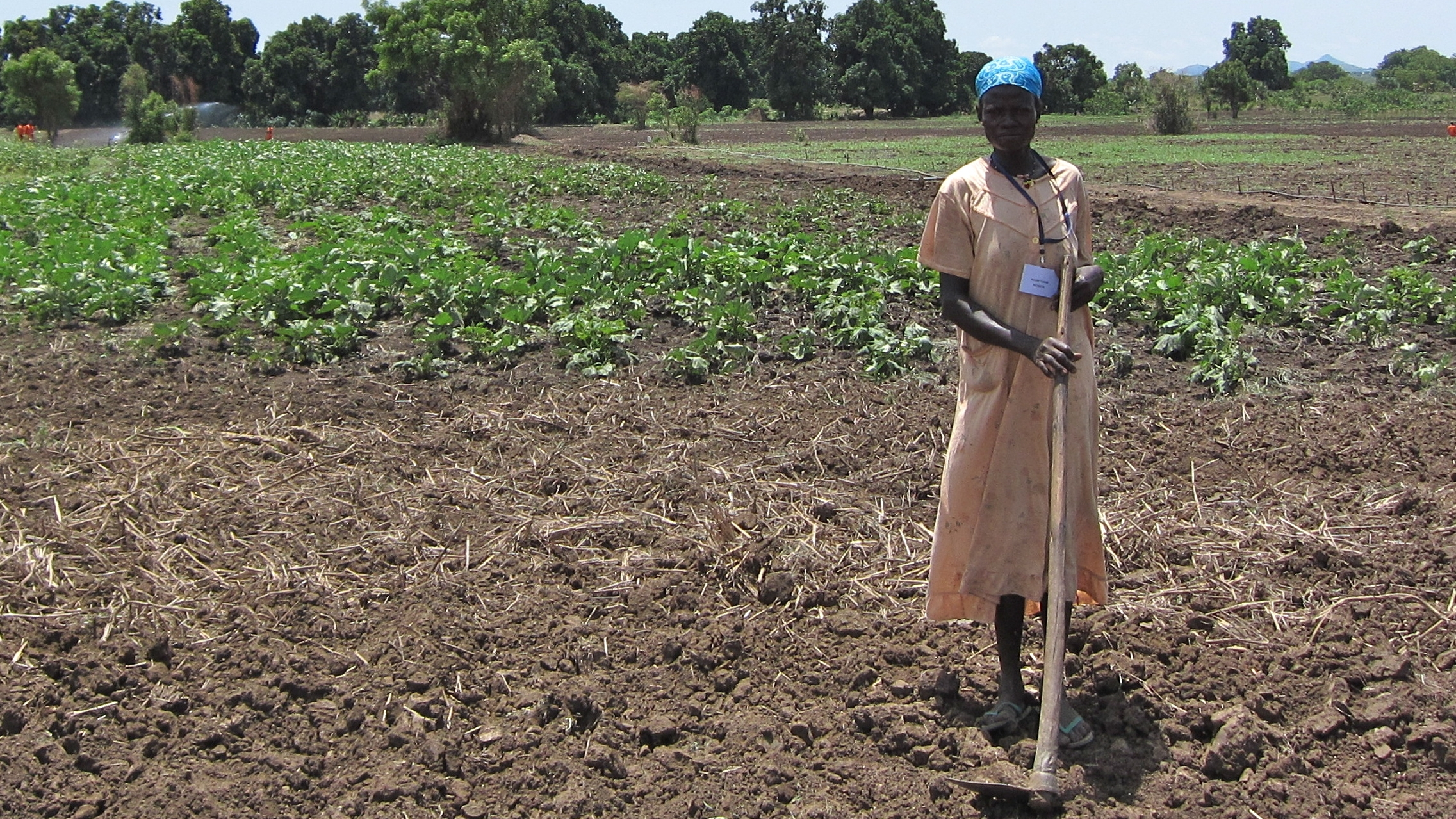 South Sudan agriculture
