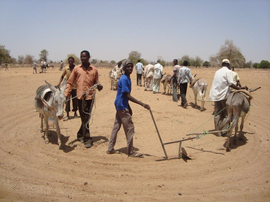 Young farmers use a donkey plow