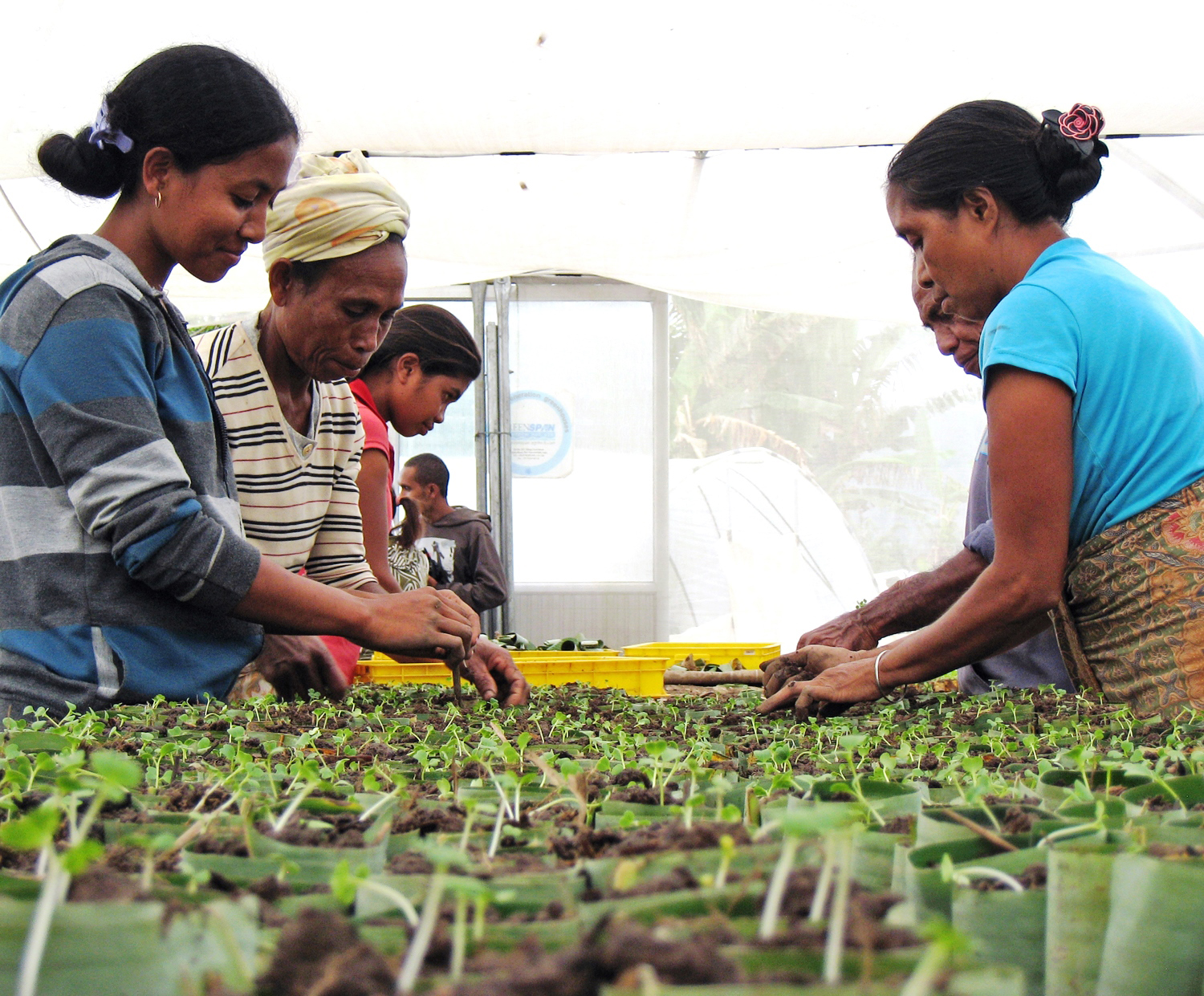 Two communities participating in USAID's horticulture value-chain project are now the owners of commercial greenhouses.