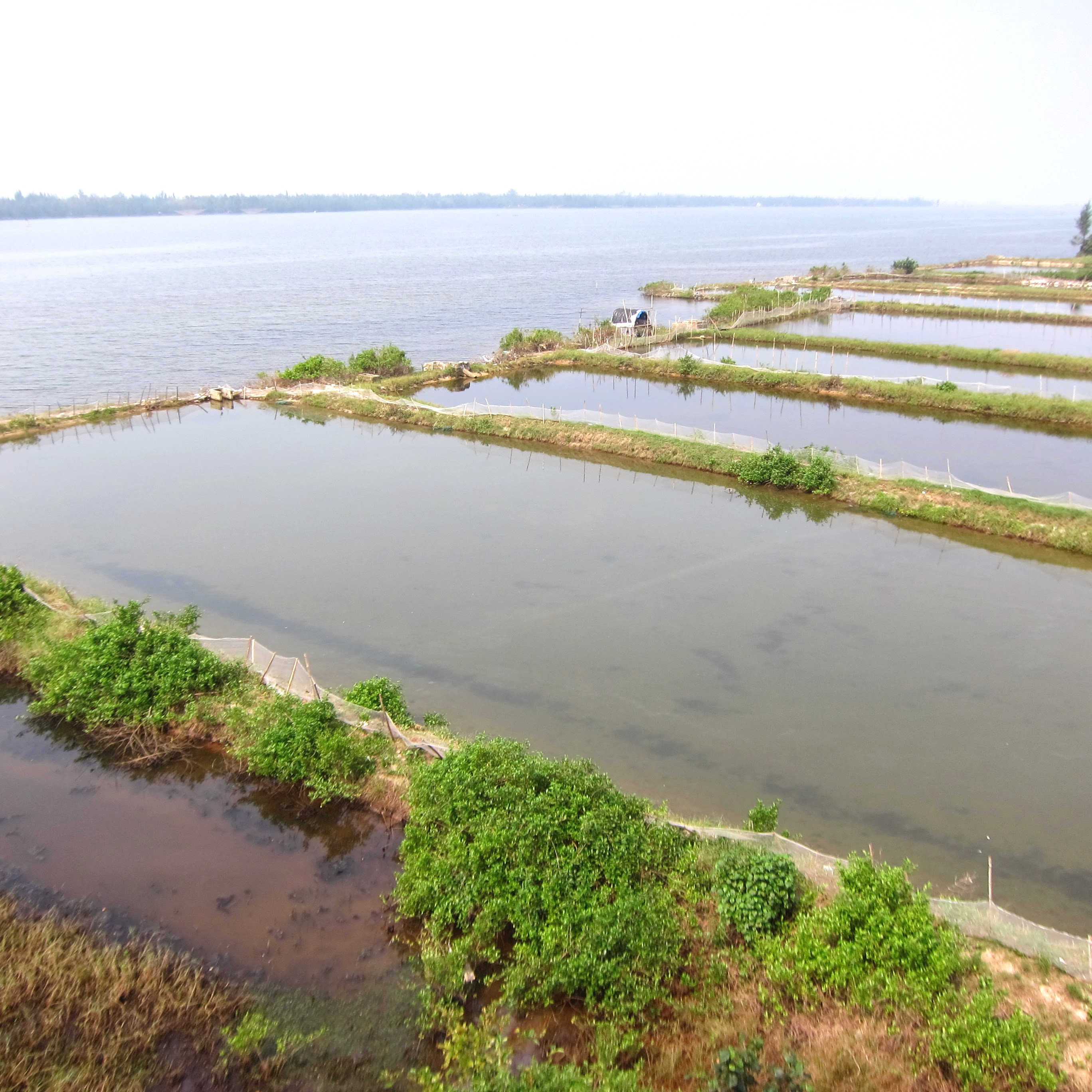 Aquaculture ponds along eastern edge of new development area in Vinh Thanh