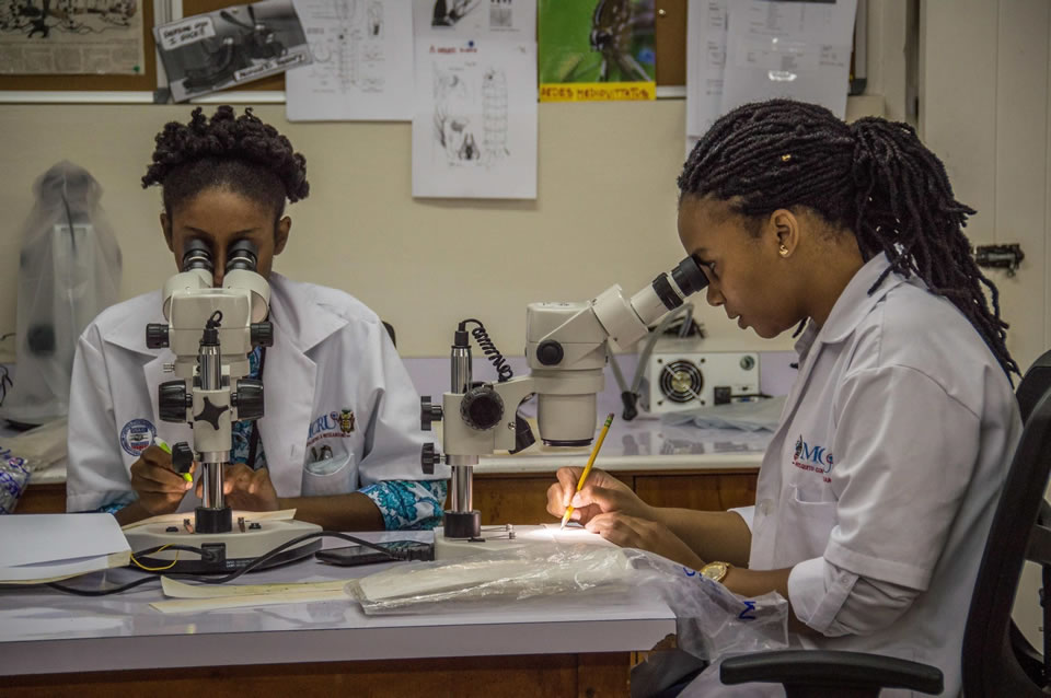 Lab supervisors Towanna Campbell and Jervis Crawford of Zap Jamaica count mosquito eggs at the University of the West Indies in Mona, Jamaica.<br /> Photo credit: Stephen Kierniesky for USAID