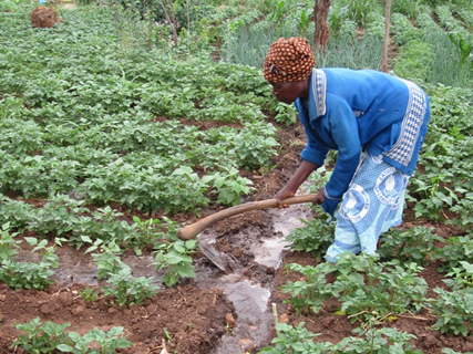 A woman in Malawi demonstrates how she uses irrigation techniques to water her crops