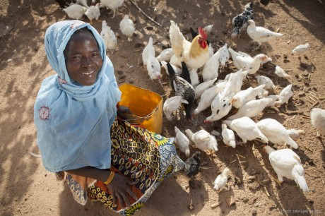 Rural chicken farmers like Sagnol Salimata, pictured here, have received technical training and barn-construction support throug