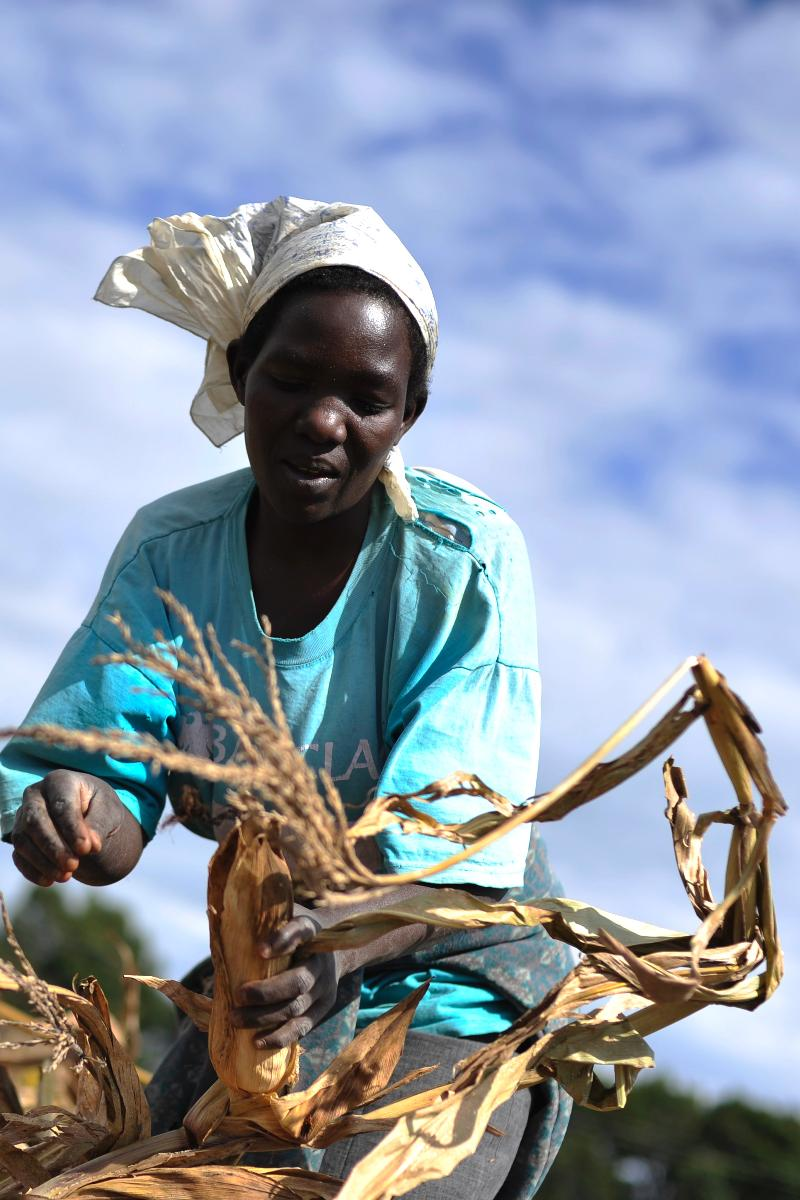 Better seeds and technologies from USAID increased income in over 867,000 households. Photo: Mariantonietta Peru, USAID