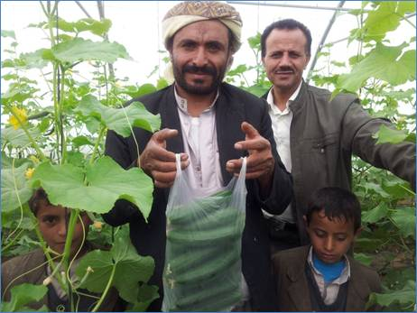 A farmer and his sons pose with cucumbers grown in a USAID-funded greenhouse in the Sawan neighborhood in Sana'a.