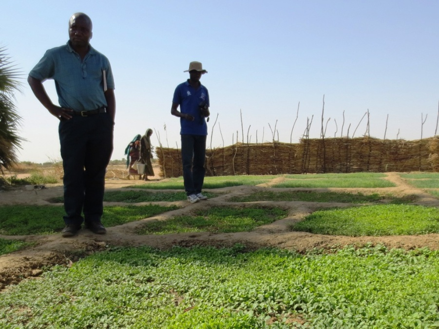 A regional advisor visits a USAID/OFDA-supported community garden in Chad.
