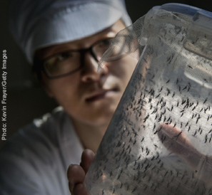 A man works with a mosquito samples