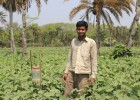 Mohammed Azad stands next to a pheromone trap, which lures insects and decreases the need for pesticides.