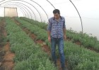 "A USAID agronomist checks on the plants. ""We applied the new magnetic water technology to plots of oregano and tarragon with the"