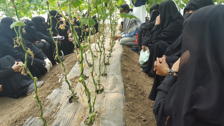 Tomato production training in De Sefal District.