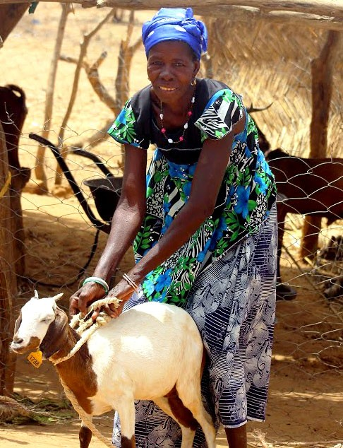 A Burkinabe woman shows off one of her goats in Burkina Faso