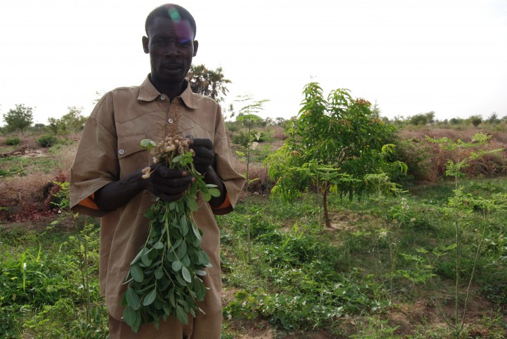 A Burkinabe man shows off his peanut crop
