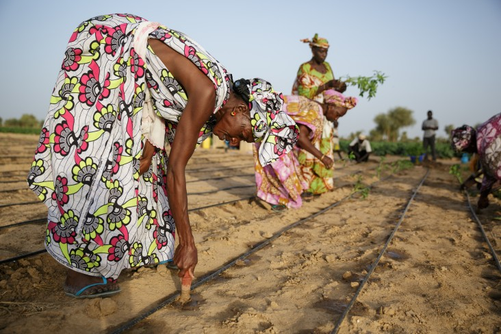 Members of the Dowroy women's group working on their vegetable garden