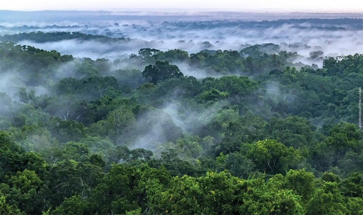 An aerial image of forest canopy at sunrise