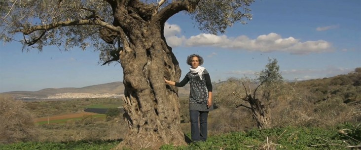 A woman stands next to an olive tree, its boughs gently swaying in a breeze with leaves falling