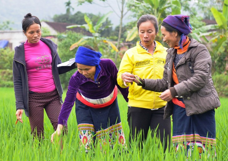 USAID supports rice production practices that help farmers adapt to climate change and improve livelihoods