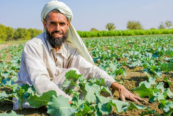 An Afghan farmer at his agriculture demonstration farm in Rodaat district of Nangarhar province in the eastern region.