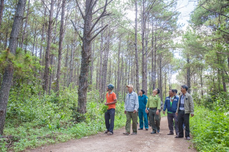 USAID helps Vietnam protect its forests.
