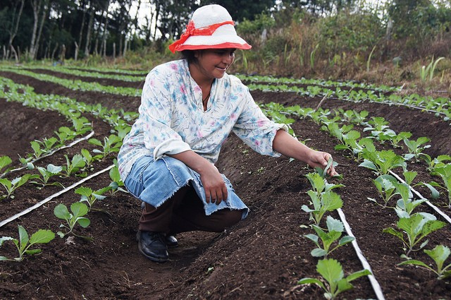 With help from Feed the Future, Honduran farmer Maria Santos Ventura is seeing dramatic improvements in her broccoli crop.