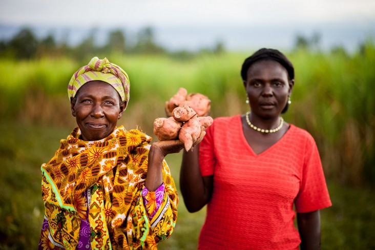 Farmers in Kenya display their sweet potato crop.