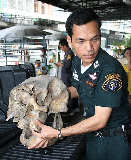 A thai officer carries a skull confiscated in Bangkok.