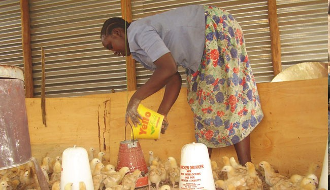 'Value Girl' Betty Anyango, 20, tends to chicks in a demo house. She is now a successful micro-entrepreneur who helps other youn