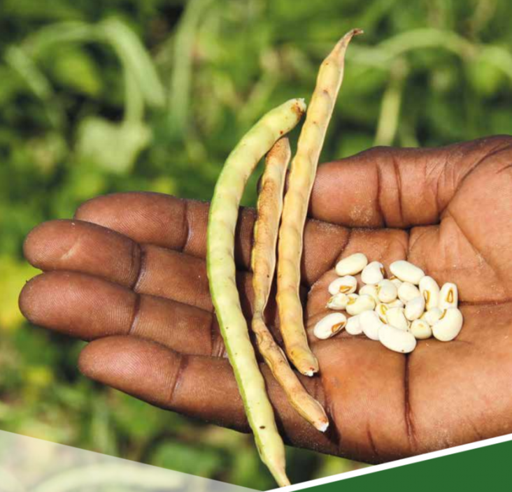 Agriculture and Food Security: Generic Seeds in Hand
