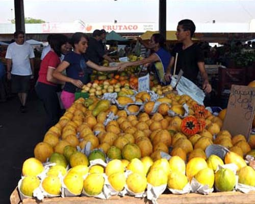 Tropical fruit production was professionalized and now is one of the major economic activities in Brazil's semi-arid region, one