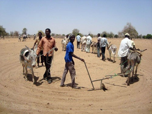 USAID is supporting training in Debab, Southern Kordofan, including how to cultivate with donkey plows, to help this largely Mis
