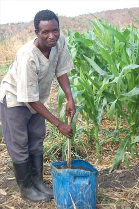 John Biro uses innovative means, such as mulch mixed with chicken manure, to fertilize his maize when no government fertilizer i