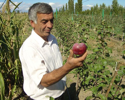 A farmer harvests apples in Georgia.