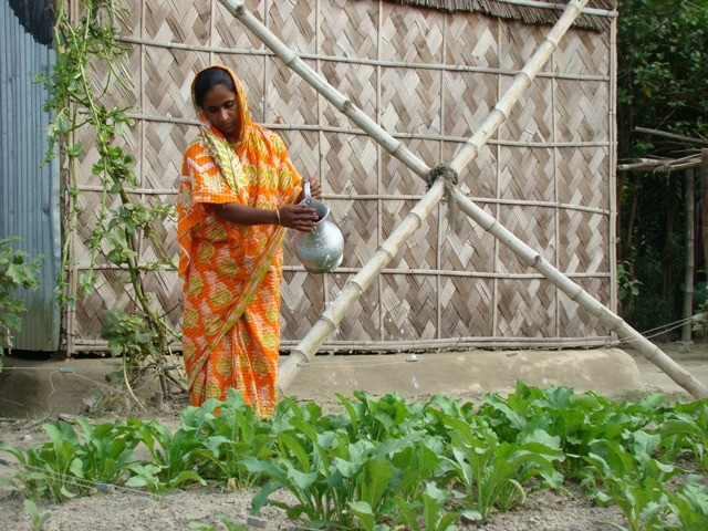 A SHOUHARDO II beneficiary maintains her homestead garden using skills she learned from the program.
