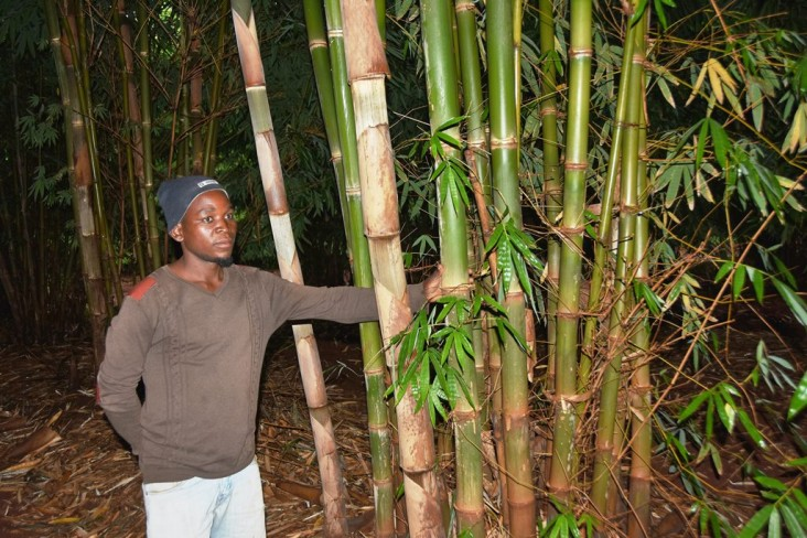 USAID Malawi Bamboo Fuel Energy Forests